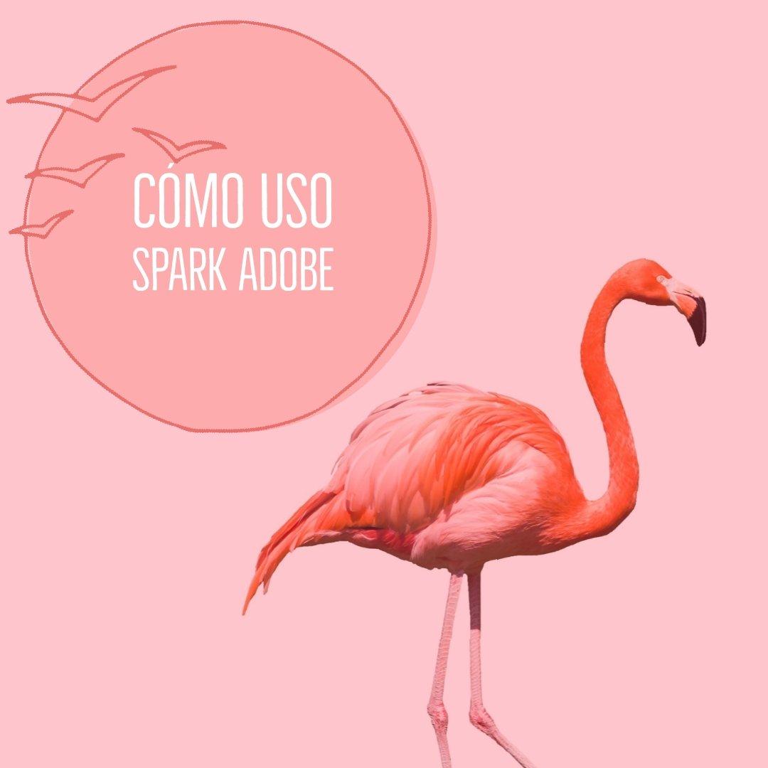 Como uso spark adobe